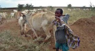 عقد صفقة كبرى لتصدير اللحوم الإثيوبية إلى مصر